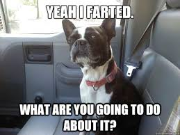 Boston Terrier Meme - yeah i farted what are you going to do about it boston terrier