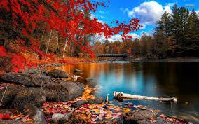autumn forest desktop wallpaper wallpapersafari