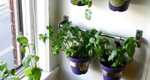 favorite indoor herb garden box tags indoor kitchen garden