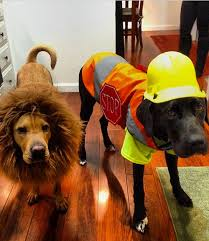 Pet Halloween Costumes Dogs 53 Funny Dog Halloween Costumes Cute Ideas Pet Costumes