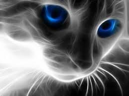 Mysterious Cat by Sky Tribe Info Warrior Tribes