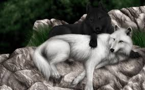25 Beautiful Black And White by Desktop Black And White Wolf Pictures Download