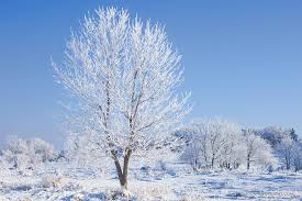 frosted trees at chalco recreation area nebraska landscape