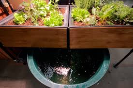 What Is Orange Flower Water - what is aquaponics