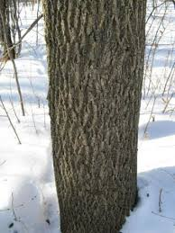 emerald ash borer resource guide agriculture trade and consumer