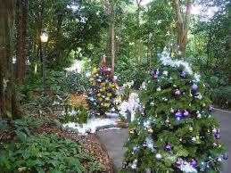 christmas greetings from singapore botanic gardens evelyn lim