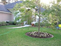 backyard ideas for landscaping with palm trees front yard