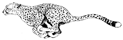 baby cheetah coloring pages for kids coloringstar