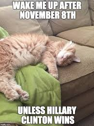 Sleeping Cat Meme - sleeping cat imgflip
