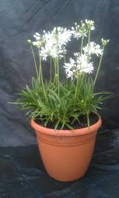 thrifty blogs on home decor eco friendly plants for gardens baby nursery ideas pictures