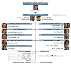 organizational chart national human genome research institute