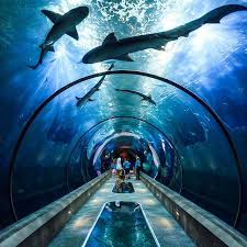 tunnel vision oregon coast aquarium exploration