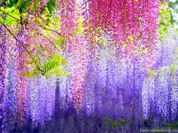 Colorful Pictures Colorful Floral Wallpapers Wallpaperpulse
