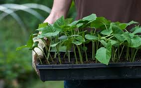 10 seed starting hacks to get your garden on the right track this
