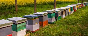 bee keepers supplies honey bees for sale bee well honey farm