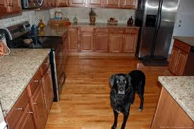 Wood Floors In Kitchen Awesome Best 25 Painted Hardwood Floors Ideas On Painted