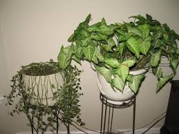 Inside Home Plants by Merrillee Whren House Plants