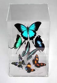 butterfly gallery butterfly
