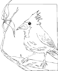cardinal coloring pages getcoloringpages com