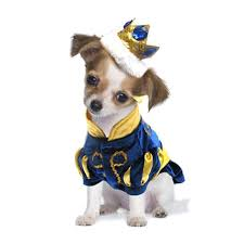 Halloween Costumes Dogs 30 Asta Halloween Costumes Images Pet Costumes