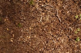 forest soil 005 ground texturify free textures
