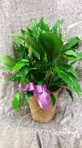 floor plant alex u0027s flowers