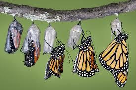 how butterflies work howstuffworks