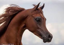 fake horse head arabian show horse described as horrific by experts daily mail