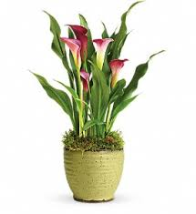 flower delivery minneapolis minneapolis flowers florist same day flower delivery shop linsk