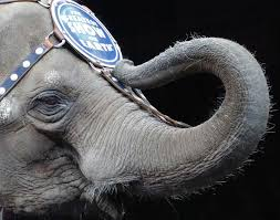 New York wild animals images Kudos to the city council for standing up for circus animals ny jpg