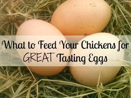 Best Laying Hens For Backyard 943 Best Chickens Images On Pinterest Backyard Chickens Chicken