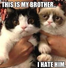 Frown Cat Meme - 30 grumpy cat funny quotes quoteshumor com