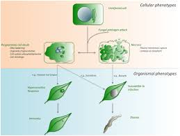 Plant Disease Journal - death be not proud u2014cell death control in plant fungal interactions