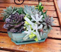 succulent container gardens for sale home outdoor decoration