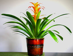 Tropical Flowers And Plants - flowering plants online