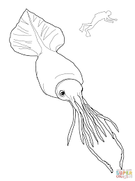 squid coloring pages giant coloring eson