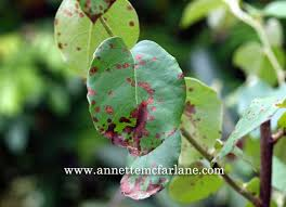 identify the disease on your plants