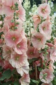31 best old fashioned flower arrangements u0026 gardens images on