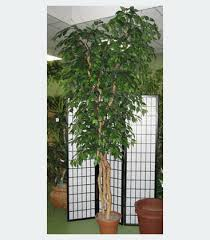 buy now on sale fig silk tree 12 foot custom made on