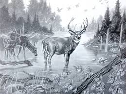 black and white pencil drawings animals drawing art u0026 skethes