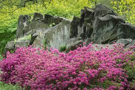 required reading the new york botanical garden gardenista