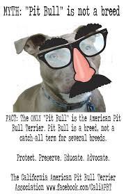 american pitbull terrier traits 14 best pit bull pride u003c3 images on pinterest pit bull love