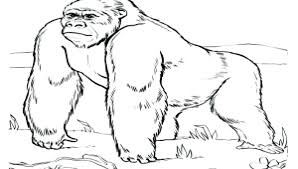 coloring page of gorilla gorilla coloring pages gorilla coloring page magilla gorilla