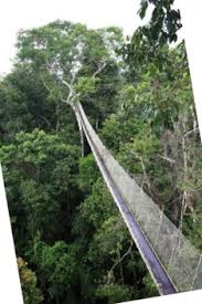 canopy amazon educational safari in the amazon rainforest staying in premier