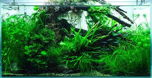 fertiliser for native plants plants bettaboxx