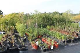 native plants ontario ontario native plant nursery container grown 705 466 6290