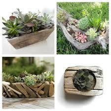 driftwood centerpieces succulent driftwood centerpiece emily a clark