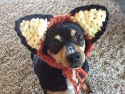 dog costume crochet pattern fox dog hat costume pet hat pet
