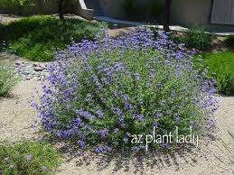 65 best california native plants selection for front yard images