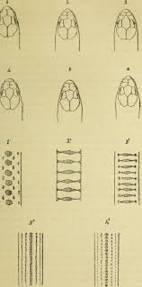 Mãªme In English - file bulletin du mus礬um d histoire naturelle 1896 20251724320
